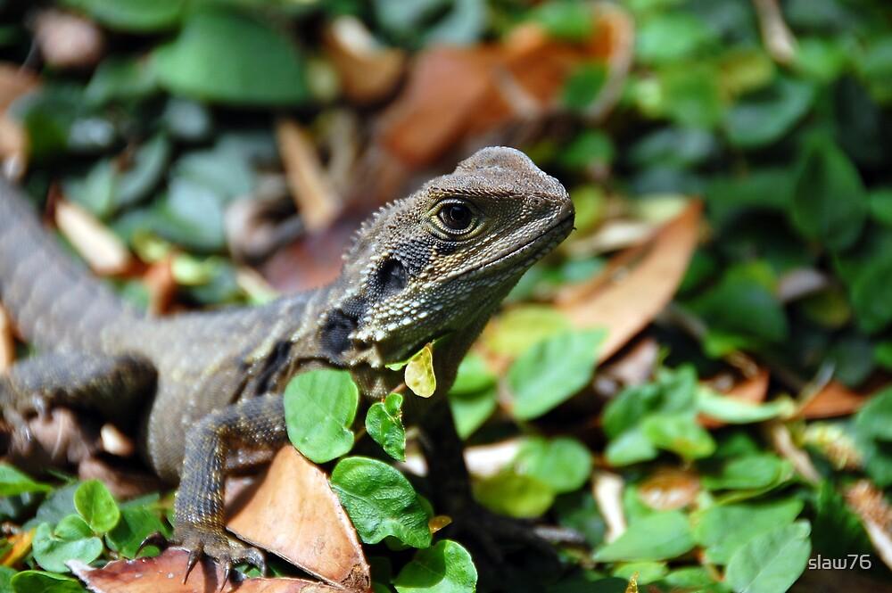 Gecko by slaw76