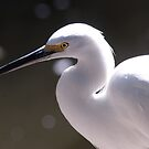 Egret by Terry Best