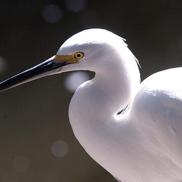 Egret by jagrolet