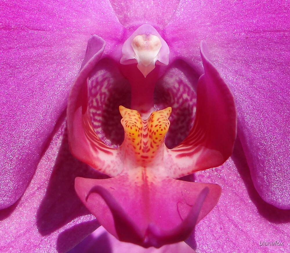 Pink Orchid by blanefox