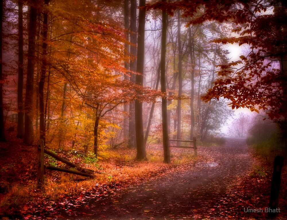 Foggy Fall wonder land by Umesh Bhatt