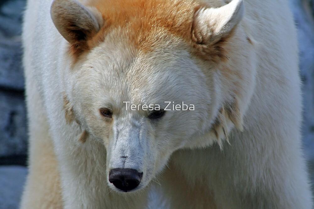 White Black Bear by Teresa Zieba