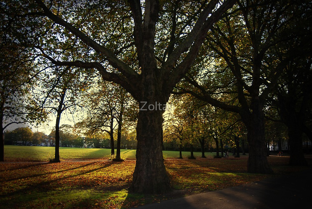 The Tree by Zoltan