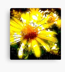 Pop Daisy Canvas Print