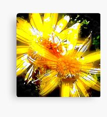 Pop Daisies Canvas Print