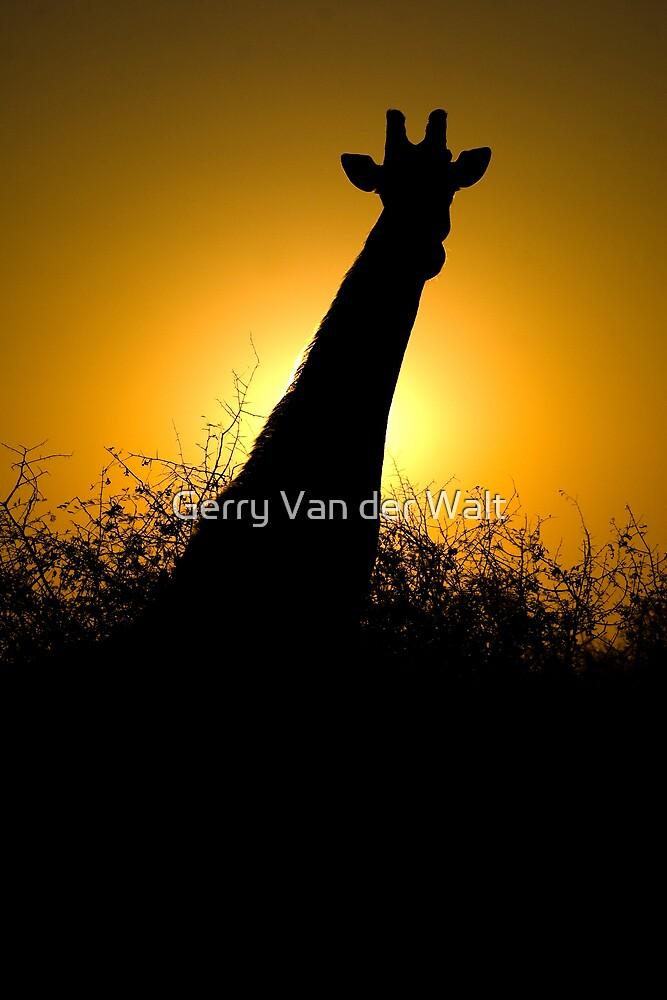 Classic Africa by Gerry Van der Walt
