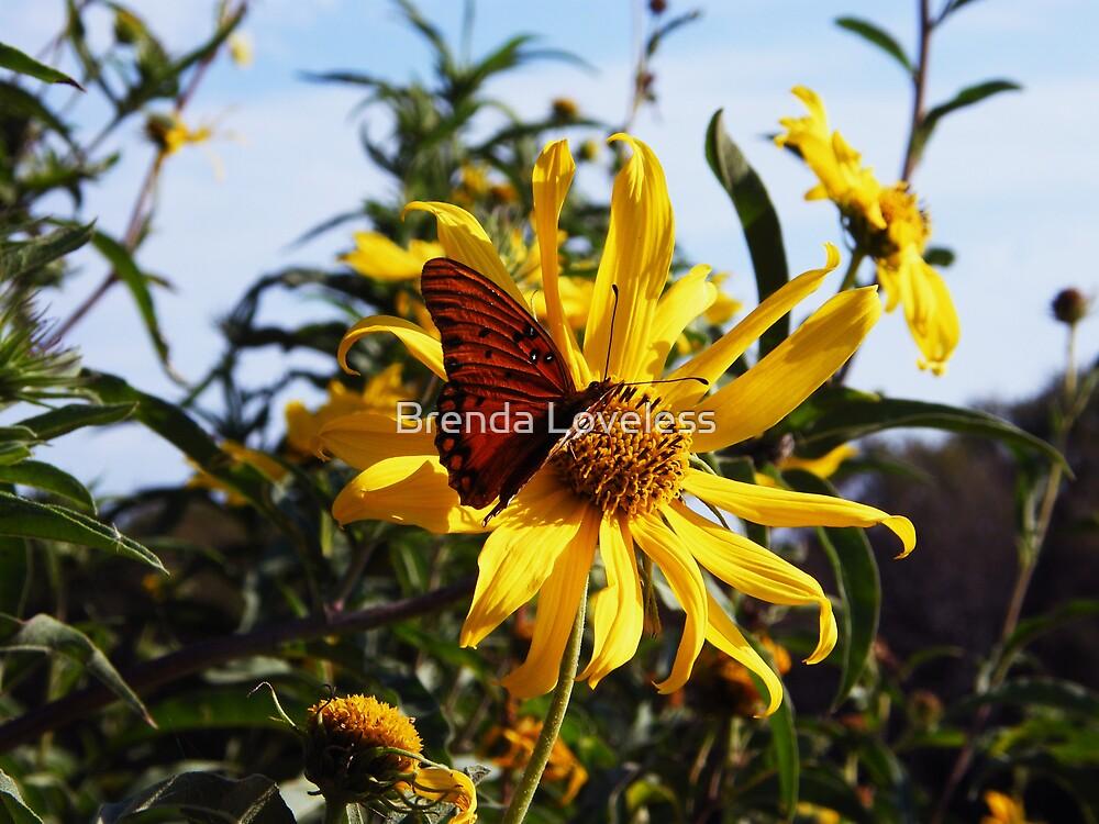 Gulf Fritillary on Sunflower by Brenda Loveless