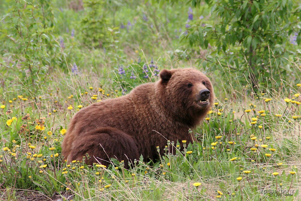 Grizz in a meadow by zpaperboyz