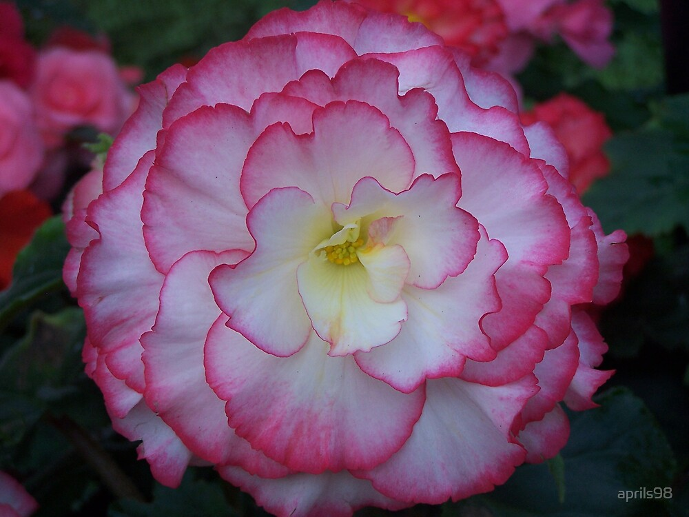 Flower by aprils98