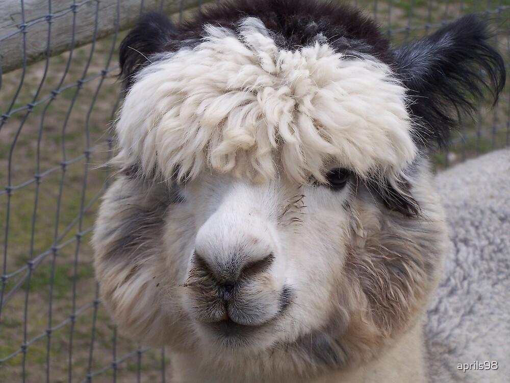 Alpaca by aprils98