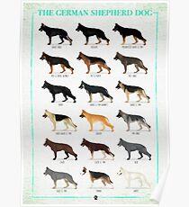 German Shepherd: Coat Colors Poster