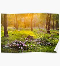 Forest sunset light flowers Poster
