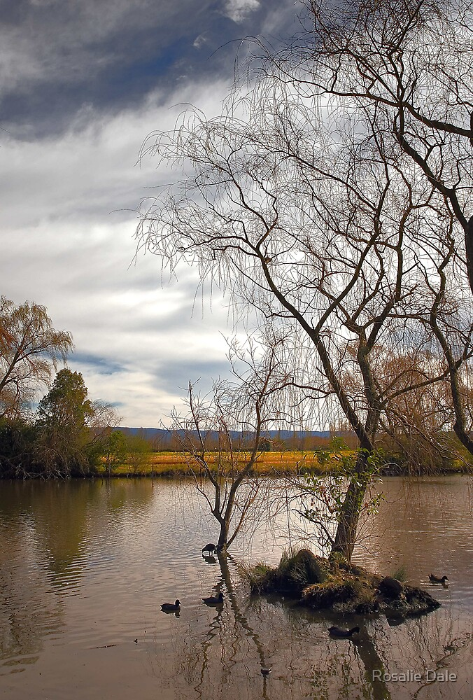 Richmond River Scene by Rosalie Dale