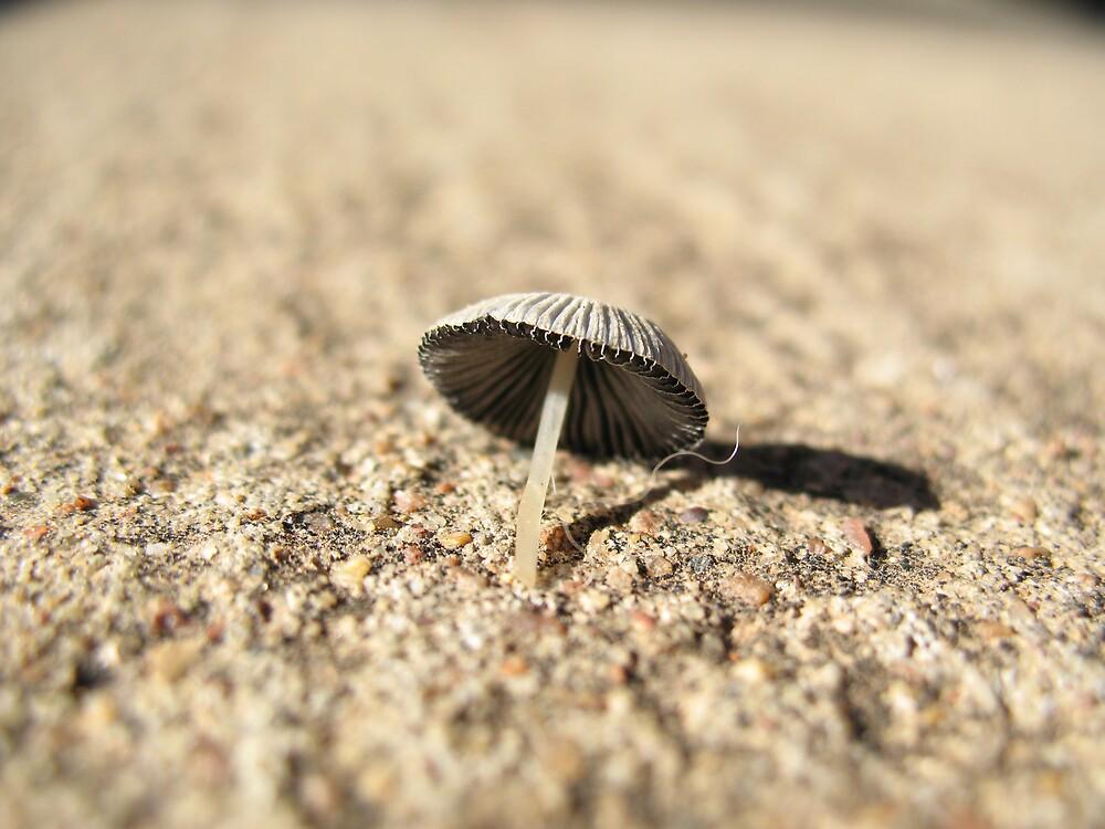 Tiny mushroom by Ross James