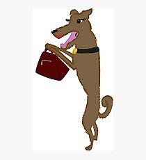 Doggy Bag Photographic Print