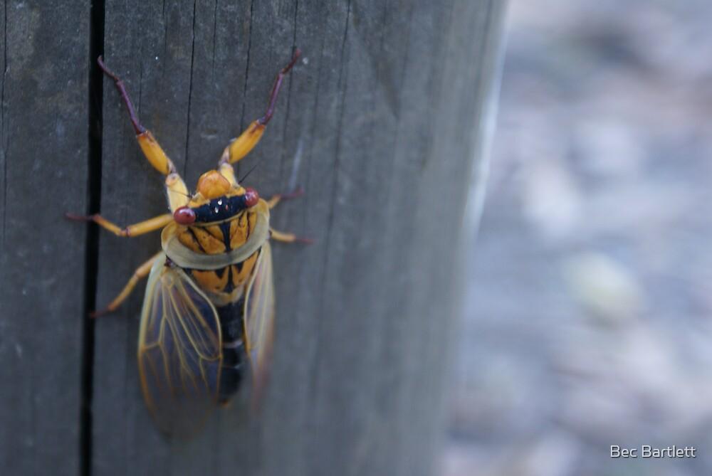 cicada by Bec Bartlett