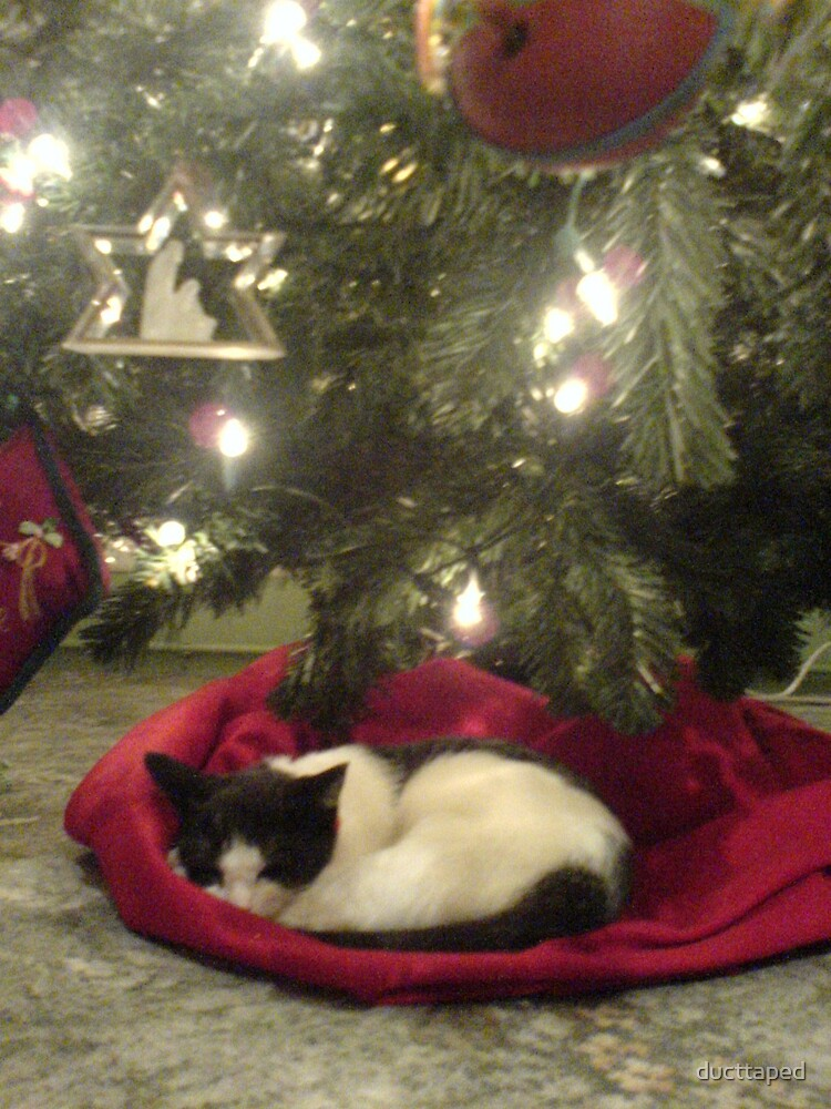 Christmas Kitten by ducttaped