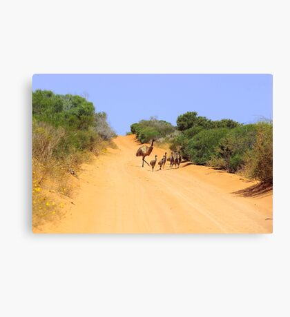 Emus on the track Canvas Print
