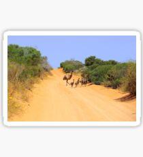 Emus on the track Sticker