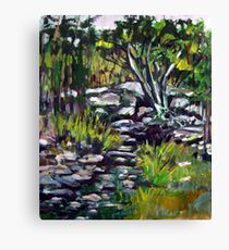 creek bed Canvas Print