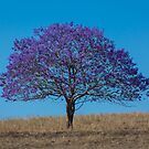 Tree on the hill by Brent Randall