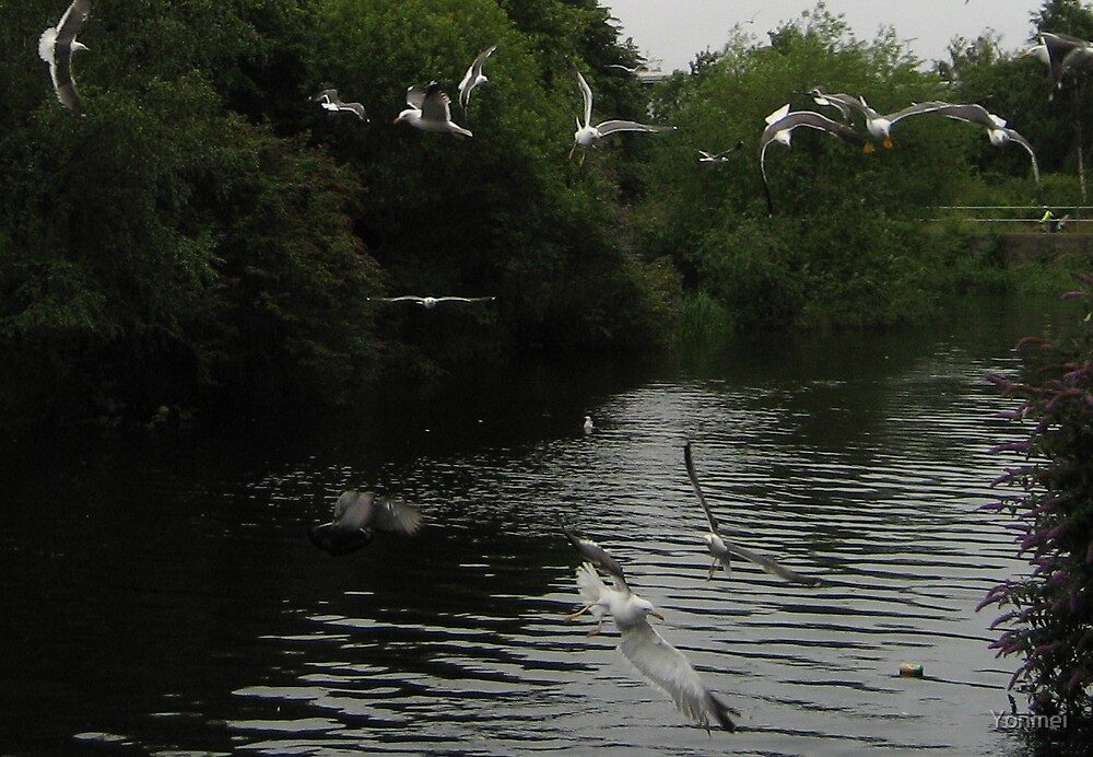Seagulls over the Water of Leith, 2 by Yonmei