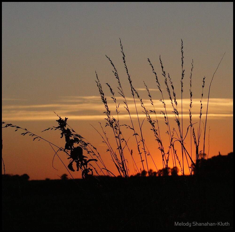 Sunset and Grass by Melody Shanahan-Kluth