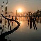 Sunrise over Manasquan Reservoir II by Debra Fedchin