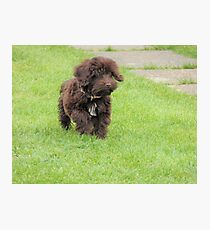 Puppy on the Grass Photographic Print