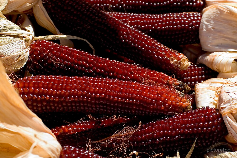 Indian Corn by picturefool