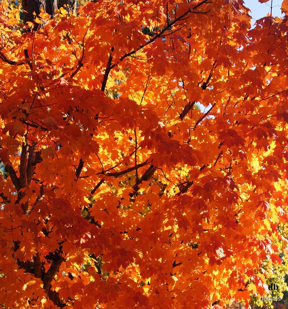 orange fall by daniels