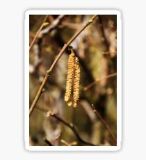 Catkins Sticker