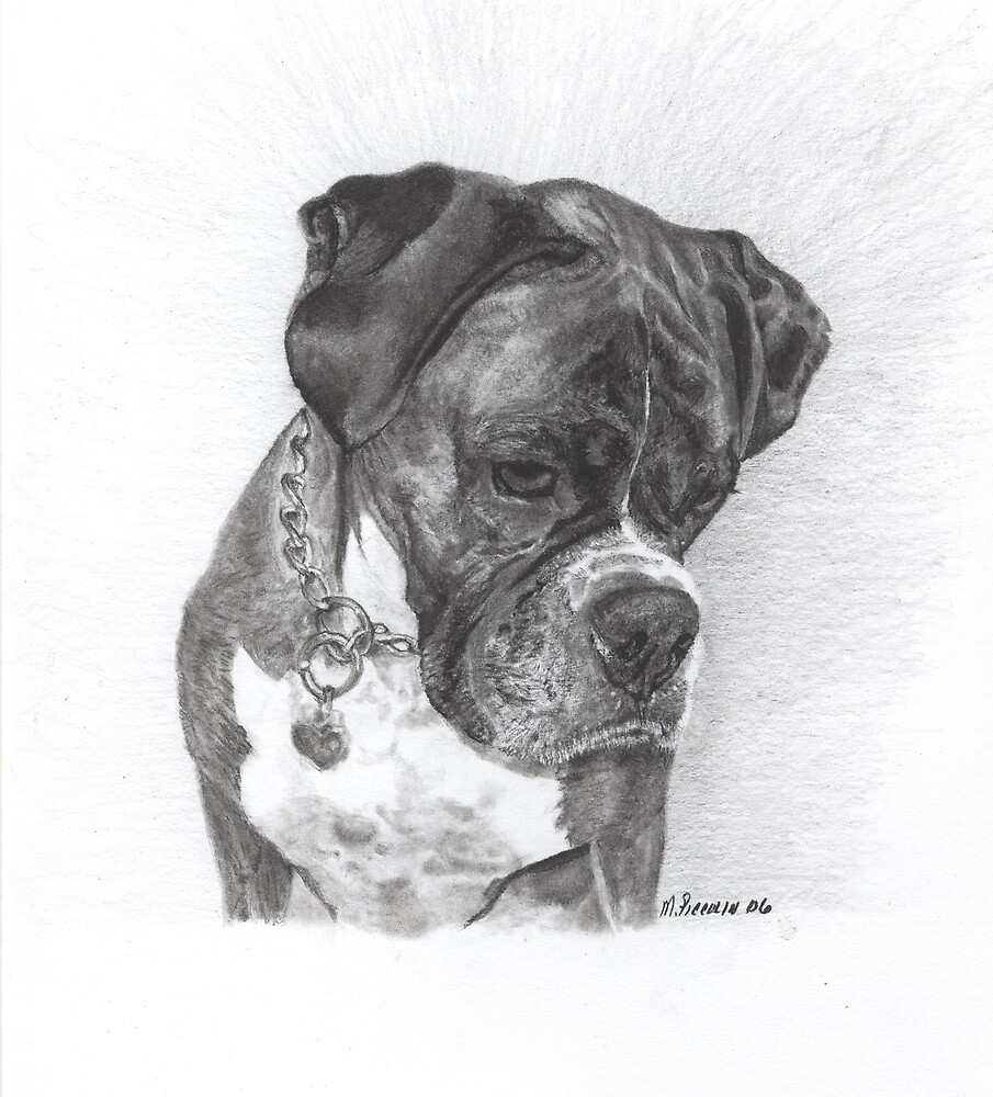 Tyson - graphite by Marlene Piccolin