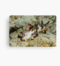 Flamboyant cuttlefish - Metasepia pfefferi Canvas Print