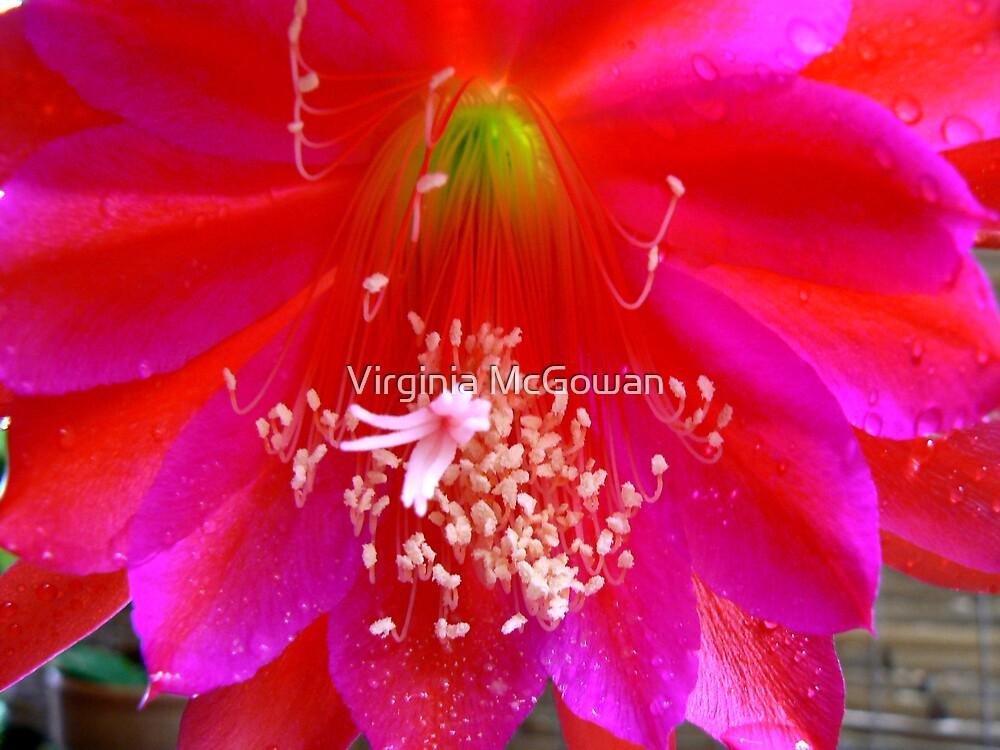 Cactus Flower by Virginia McGowan