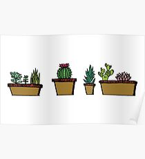 Cacti - Color Poster