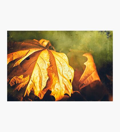 Withered leaves Photographic Print