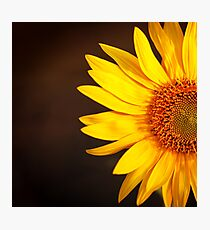 Bright sunflower in sunset light Photographic Print