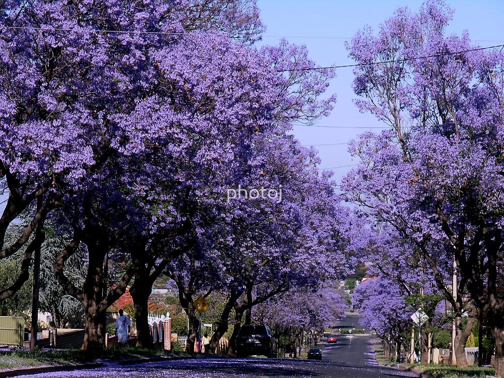 photoj-South Aust, Jack Tree's by photoj