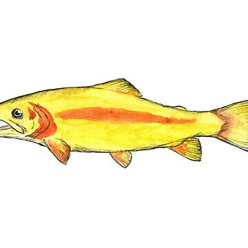 palomino rainbow trout by CarsonSloas