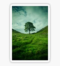 The Tree at Sycamore Gap 1 Sticker