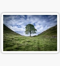 The Tree at Sycamore Gap 2 Sticker