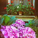 Hydrangea and geraniums by Silvia Ganora