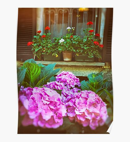 Hydrangea and geraniums Poster