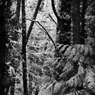snowy Oregon forest 3 by Dawna Morton