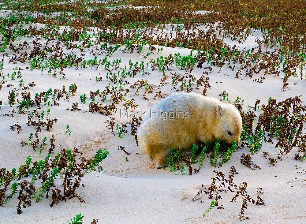 White Wombat by Mark Higgins