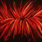 Big Red Emotional High (Oils 76 x 101cm) by ArtStudioV