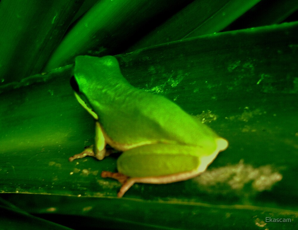 """MINATURE TREE FROG ABOUT 1"""" LONG by Ekascam"""