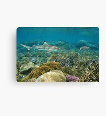 Underwater coral reef shark and sea turtle Canvas Print