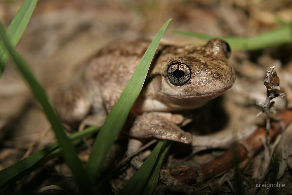 Garden Frog by craignoble